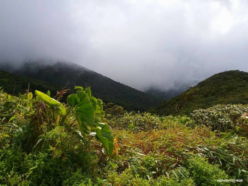 GUADELOUPE-SOUFRIERE (14)