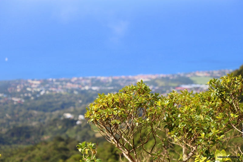 GUADELOUPE-SOUFRIERE (15)