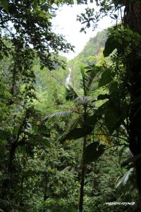 guadeloupe-chutes du carbet